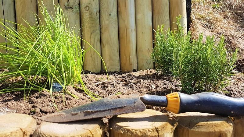 Havebede med krydderurter