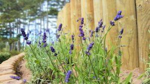 Havebede med pælehegn