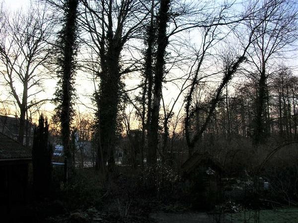 Træ tæt på hus