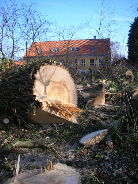 Fældet træ