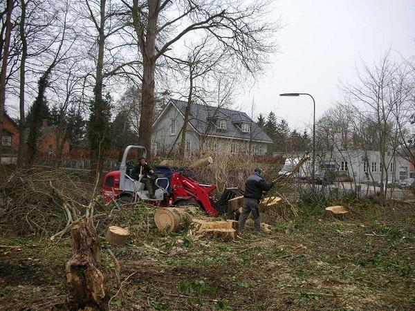 Træ oprydning