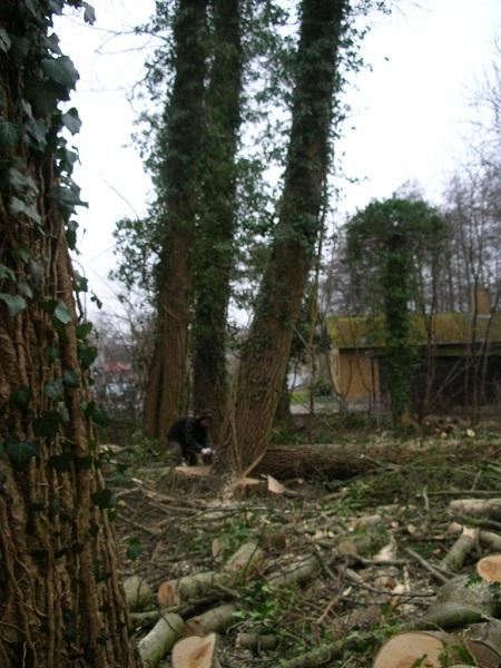 Træer tæt ved hus